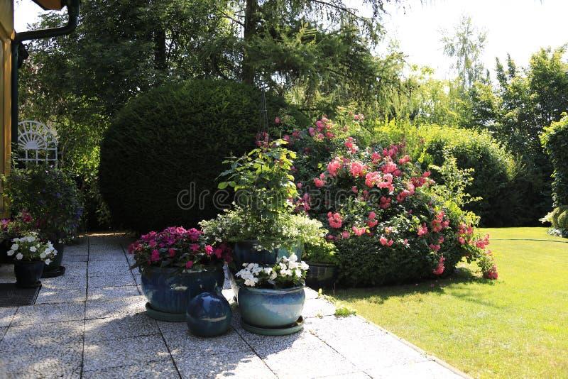 Flor en la terraza y en el jardín imágenes de archivo libres de regalías