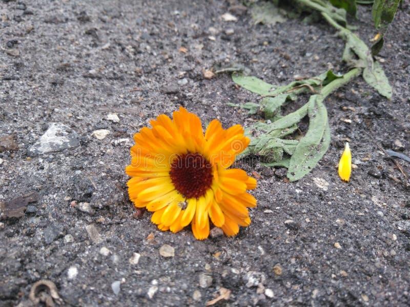 Flor en la tierra fotos de archivo