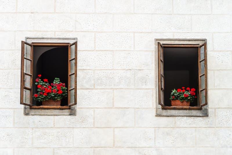 Flor en la ventana en la pared blanca fotos de archivo