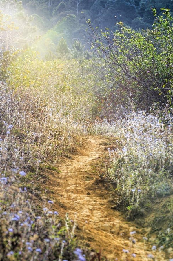 Flor en lat de DA fotografía de archivo