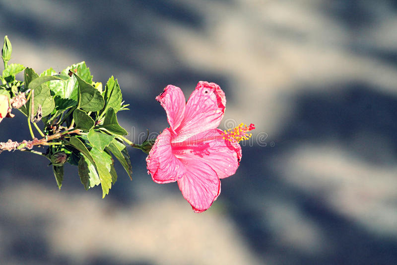 Flor En los angeles Calle obrazy stock