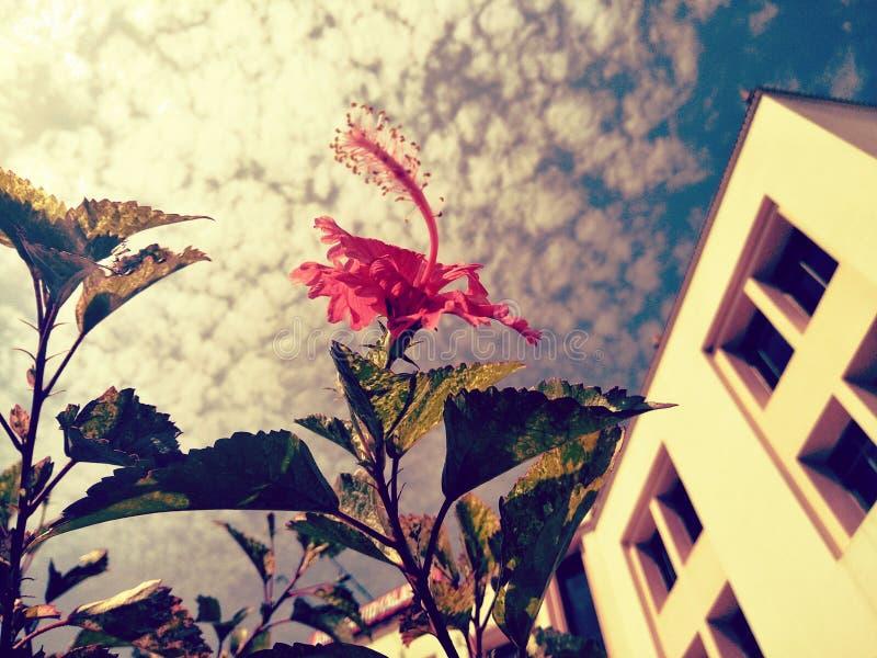 Flor en los revestimientos de la naturaleza foto de archivo
