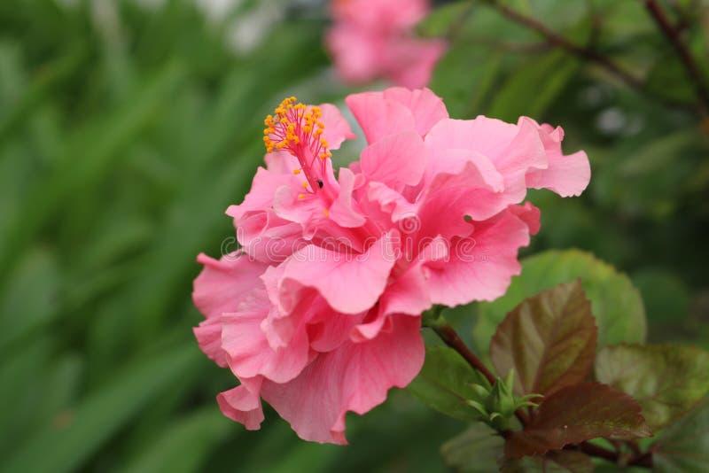 Flor en matanza de la parte fotos de archivo