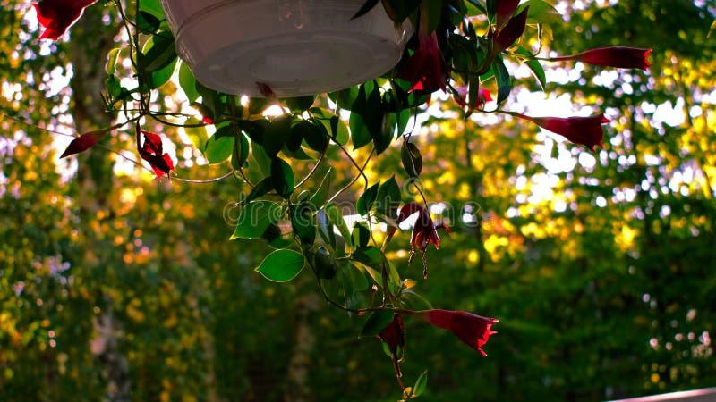 Flor en otoño fotos de archivo