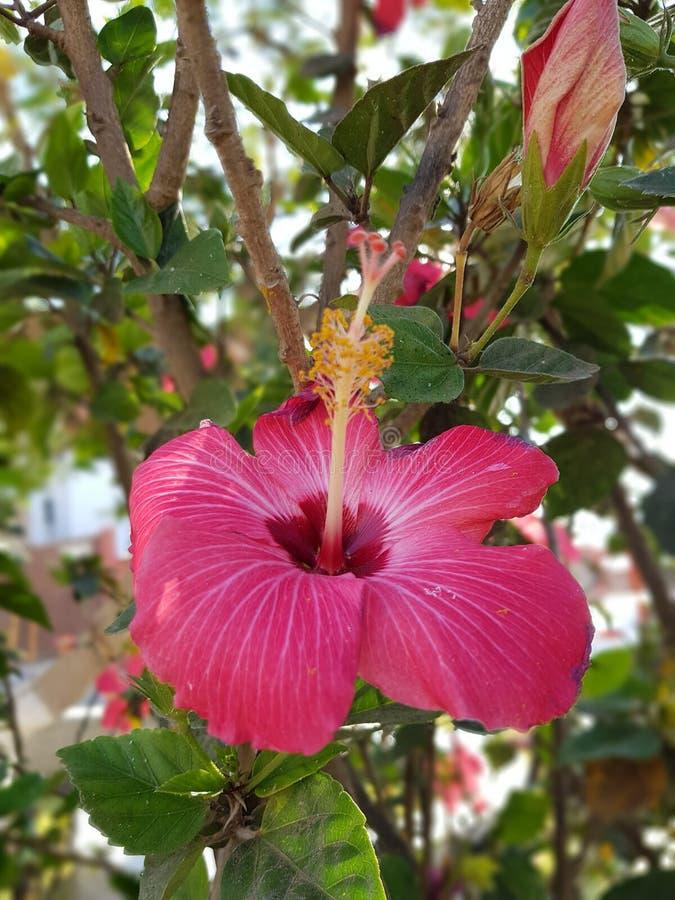 Flor en Pacasmayo fotografía de archivo libre de regalías