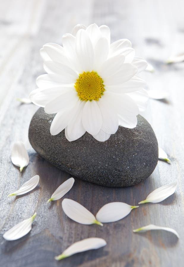 Flor en piedra imagen de archivo