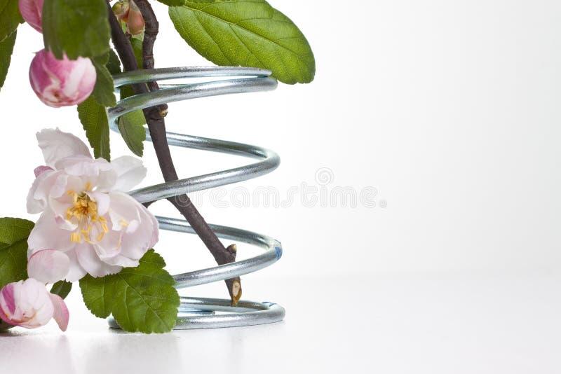 Flor en resorte del metal fotos de archivo libres de regalías