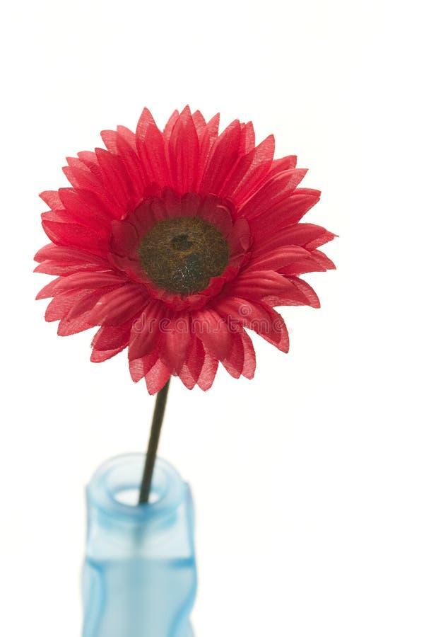 Flor en un florero imagenes de archivo
