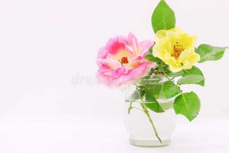 Flor en un florero de cristal, primer en un fondo blanco en un florero, postal por un día de fiesta, flores hermosas de las rosas fotografía de archivo libre de regalías