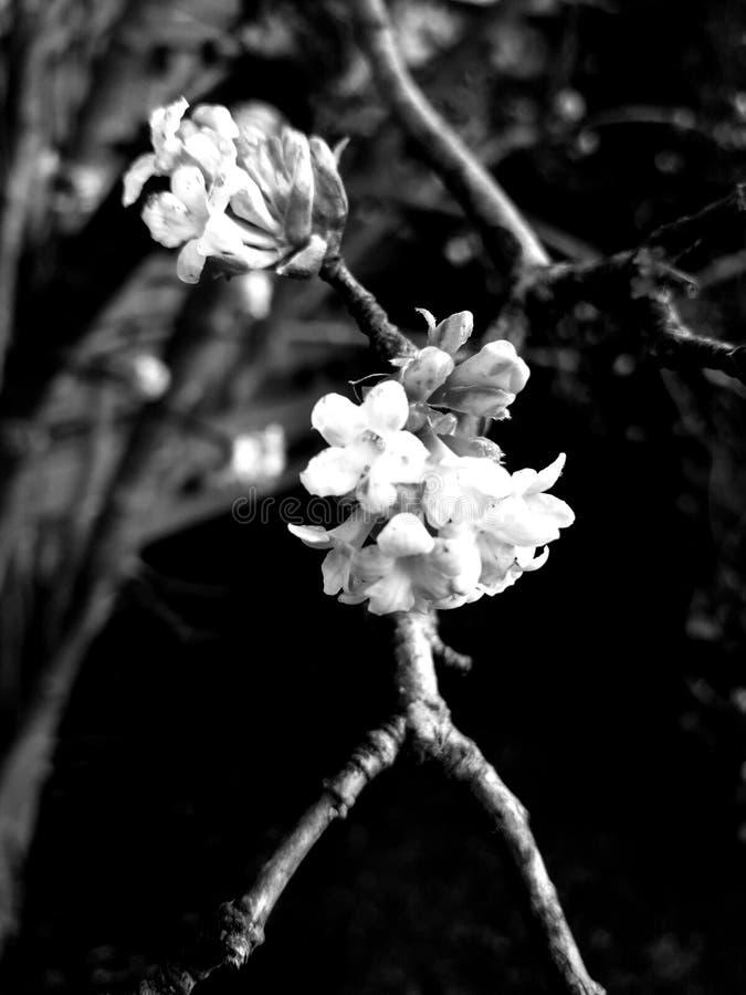 Flor en un palillo foto de archivo libre de regalías