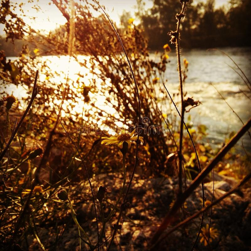 Flor en un río fotos de archivo