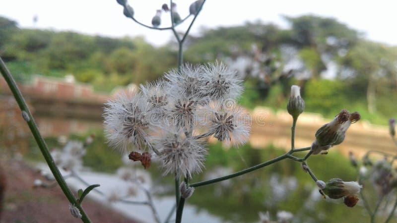 Flor en una charca imagen de archivo libre de regalías