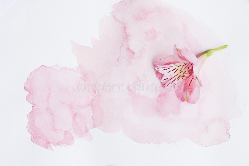 Flor en una hoja de la acuarela fotos de archivo libres de regalías