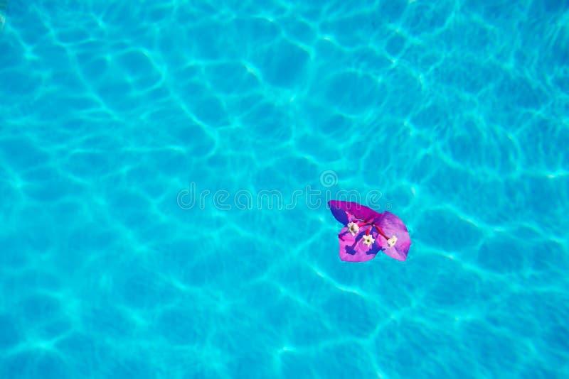 Flor en una piscina foto de archivo libre de regalías