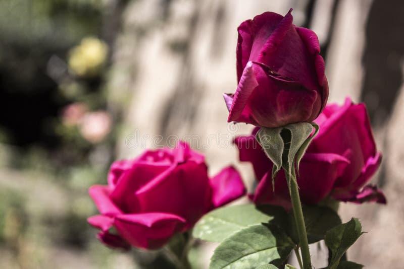 Flor en verano fotografía de archivo