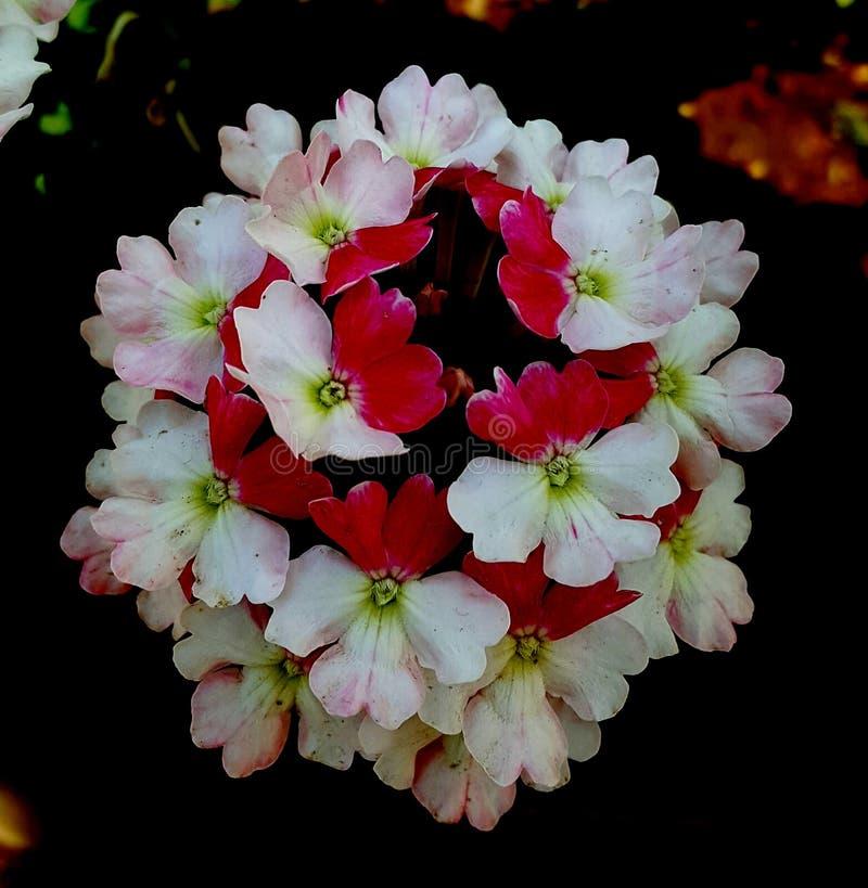 Flor encantadora imagem de stock royalty free