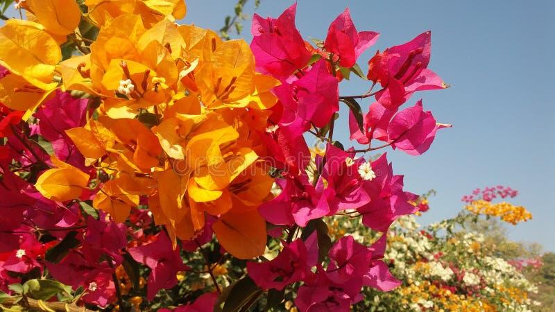 Flor encantadora fotografia de stock royalty free