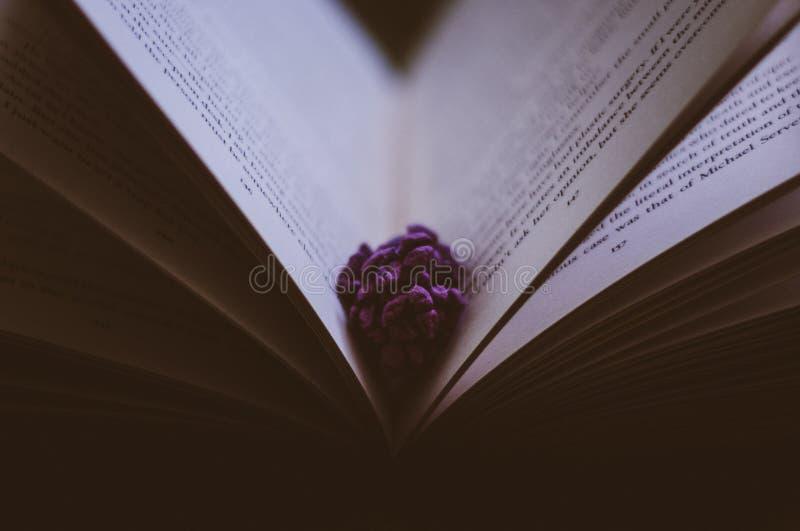 Flor entre las páginas del libro fotos de archivo