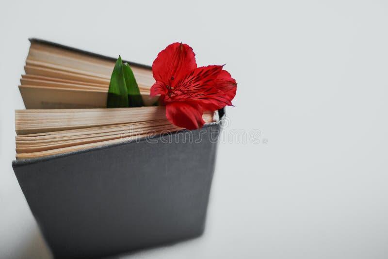 Flor entre las p?ginas del libro fotos de archivo libres de regalías