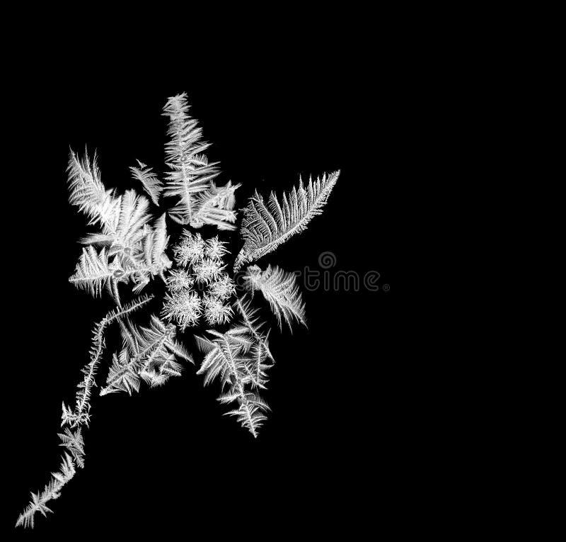 Flor escarchada fotos de archivo