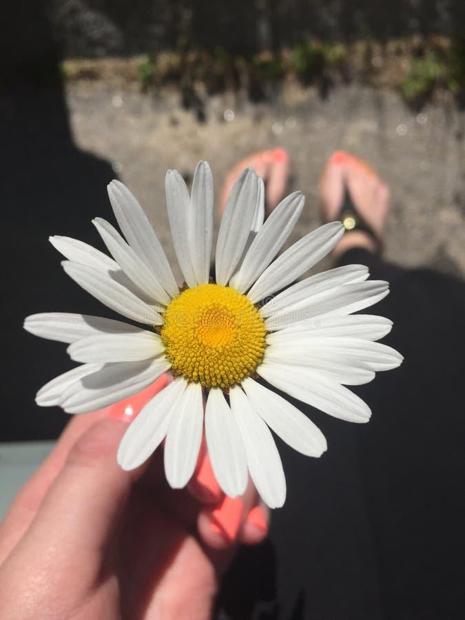 Flor escogida fresca imagen de archivo