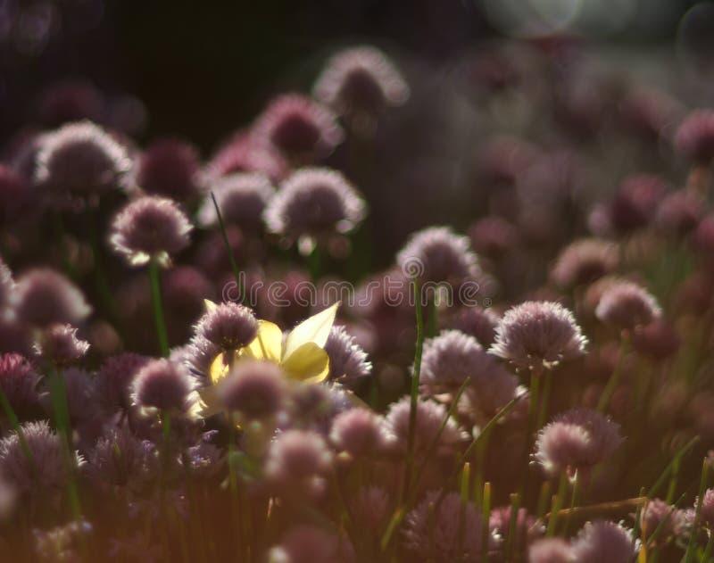 Flor escondida do secreat foto de stock