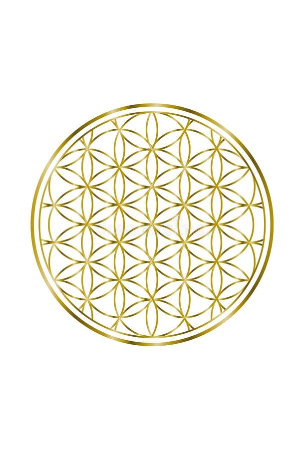 Flor espiritual da ilustração 1 do ouro da vida ilustração do vetor