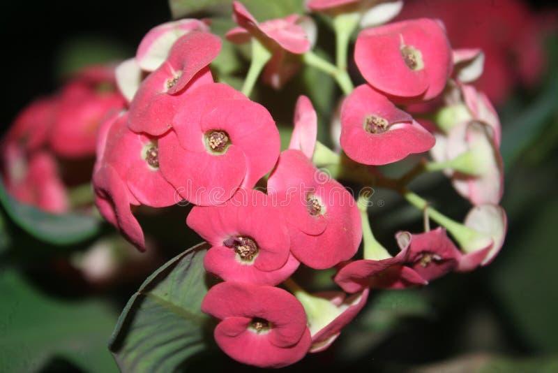 Flor exótica imagem de stock royalty free