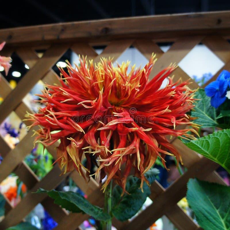 Flor extranjera foto de archivo libre de regalías