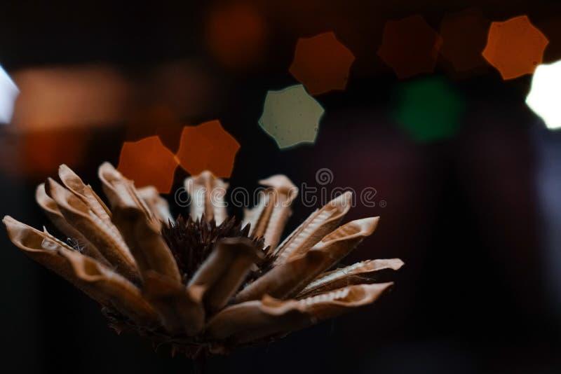 Flor falsa fotografía de archivo libre de regalías