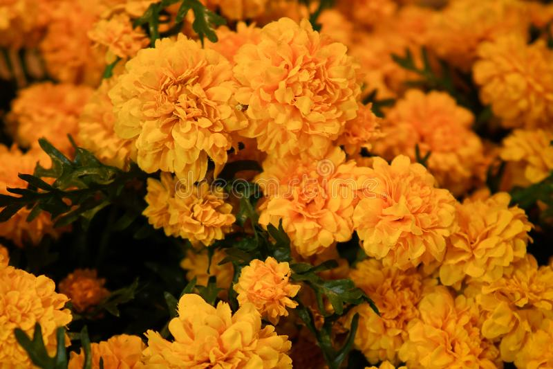 Flor falsa y fondo floral fotografía de archivo libre de regalías