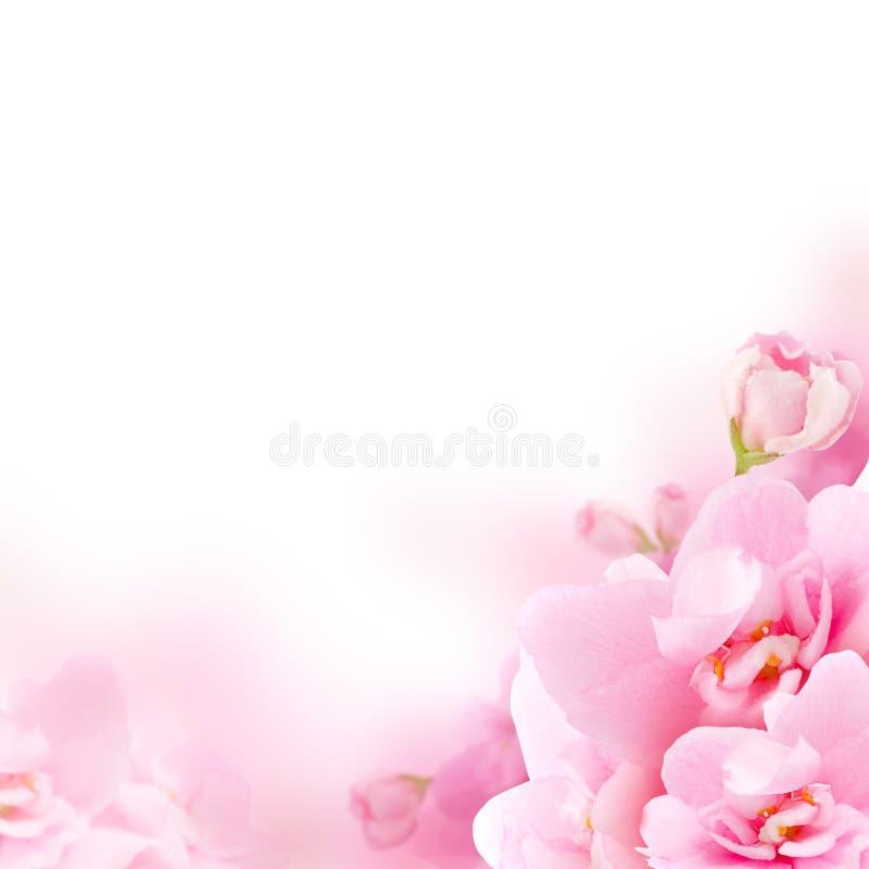 Flor - flor rosada, fondo floral imagen de archivo libre de regalías