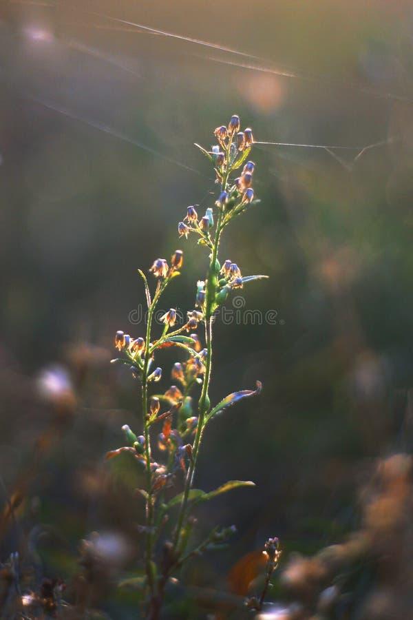 Flor, flor, floración imágenes de archivo libres de regalías