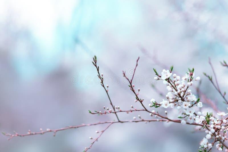 Flor floral da mola fotos de stock royalty free