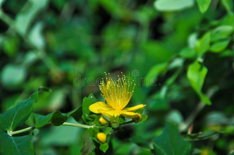 Flor floreciente fotografía de archivo libre de regalías