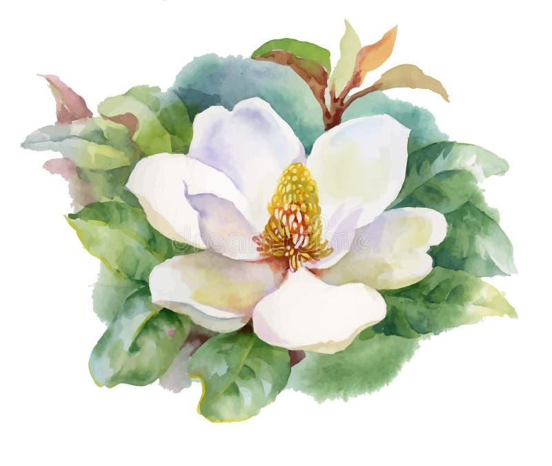 Flor floreciente de la magnolia del verano de la acuarela ilustración del vector