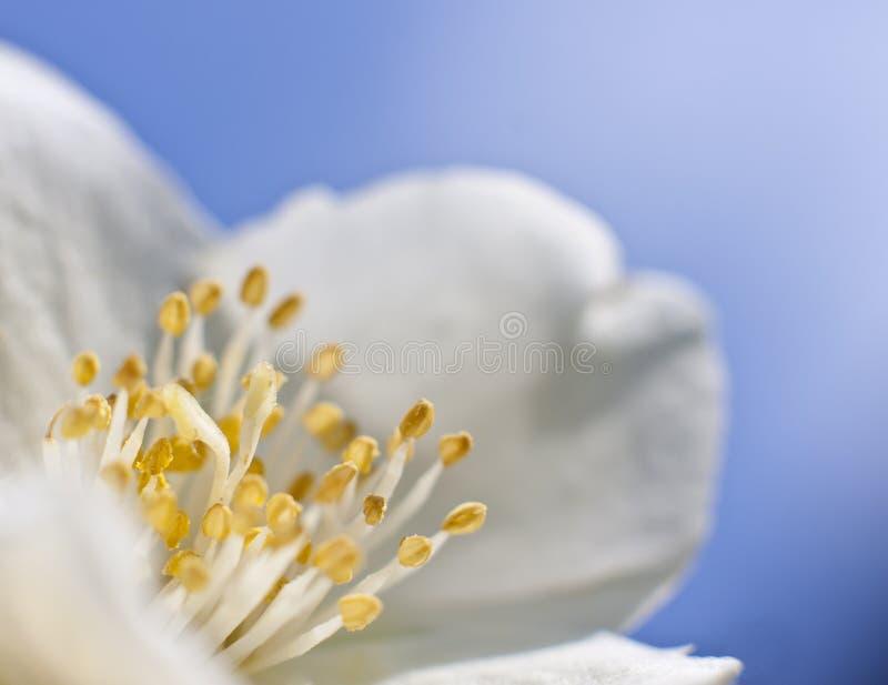 Flor floreciente macra foto de archivo libre de regalías