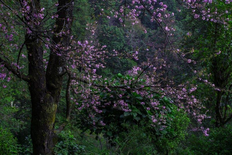Flor florescendo em Annapurna Conservation Area, Nepal fotos de stock