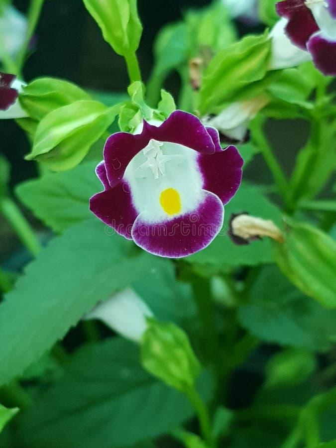 Flor fresca imagenes de archivo