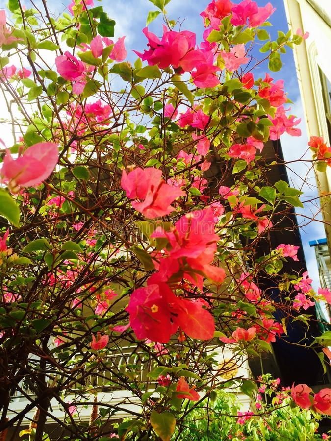 Flor fresca foto de stock royalty free