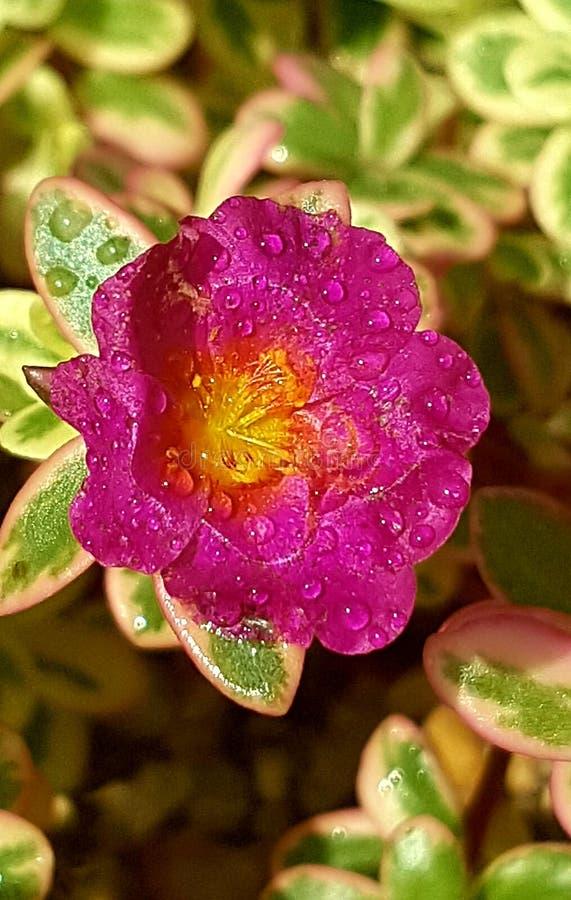 Flor fresca imágenes de archivo libres de regalías