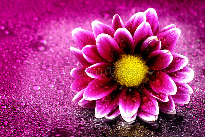 Flor fresca da mola fotos de stock