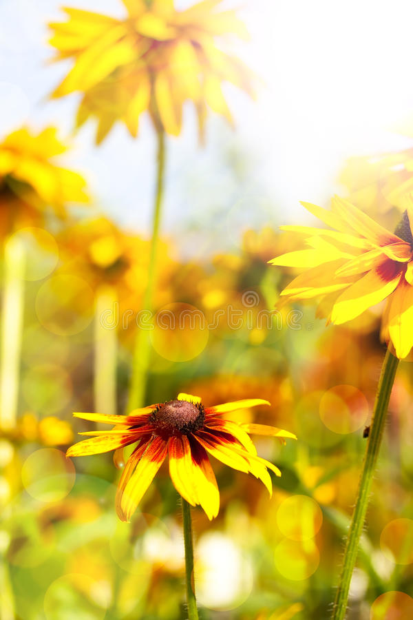 Flor fresca do jardim do Close-up imagens de stock royalty free