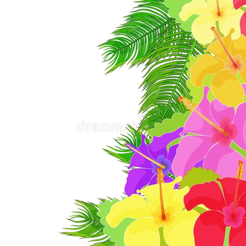 A flor havaiana do hibiscus do cartão Ilustração do vetor ilustração do vetor
