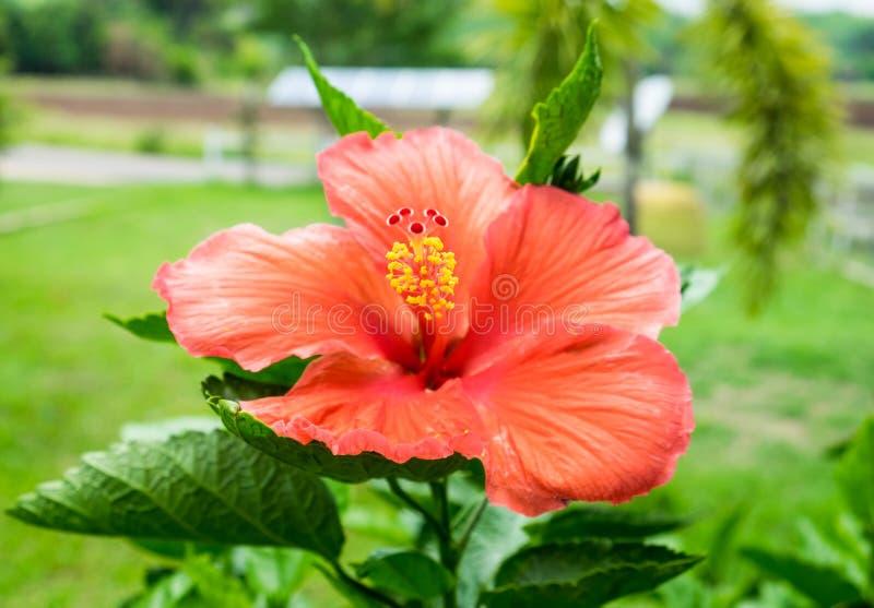 Moderno Flor Hawaiana Del Arte Del Uña Inspiración - Ideas Para ...