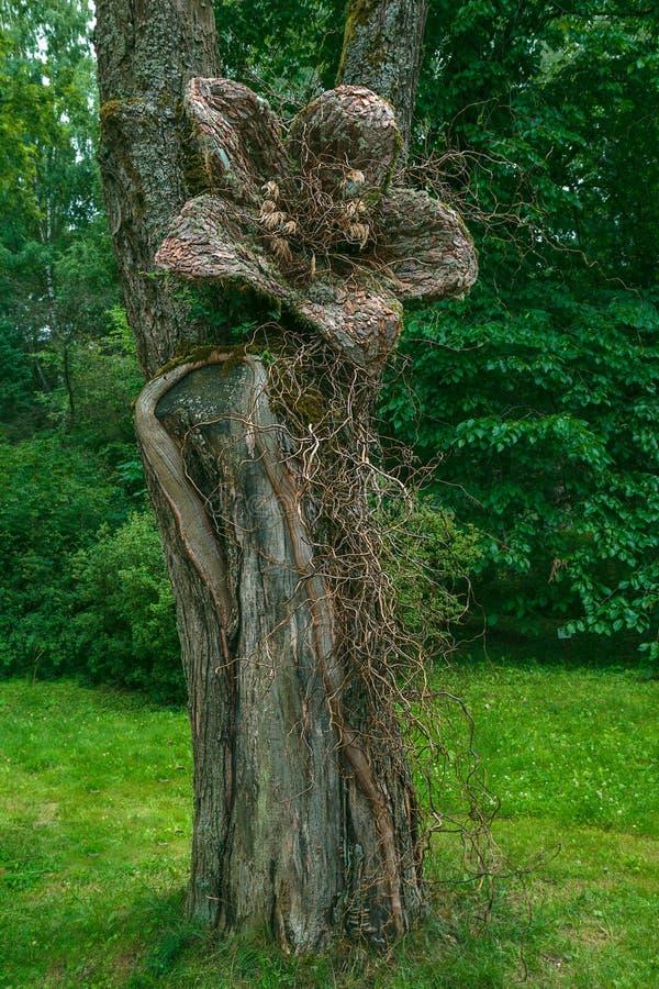 Flor hecha a mano hermosa en el árbol en el parque foto de archivo