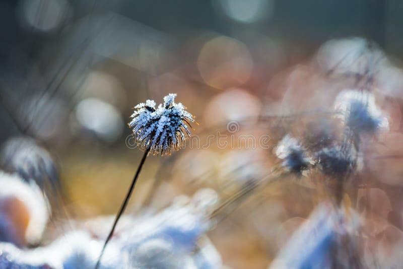 Flor helada foto de archivo