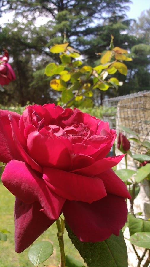 Flor hermosa imágenes de archivo libres de regalías