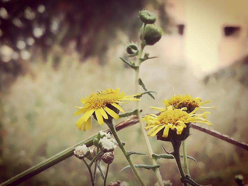 Flor hermosa fotos de archivo