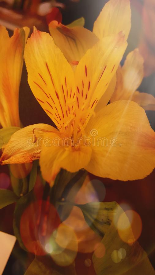 Flor hermosa fotografía de archivo libre de regalías